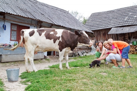 Family farm with calf and dog playing