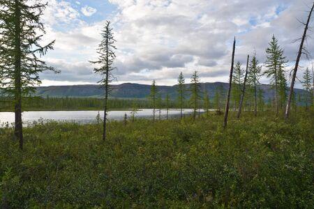Photo pour Taiga lake. Lake view on the Putorana plateau, Taimyr, Siberia, Russia. - image libre de droit
