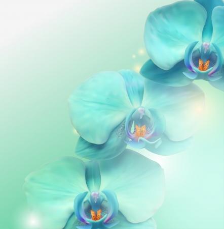 Illustration for Flower background layout - Royalty Free Image