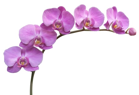 Flower Orchid frame background