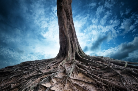 Foto de Scenic background of old tree and roots at night  Moon light magic and mystery landscape - Imagen libre de derechos