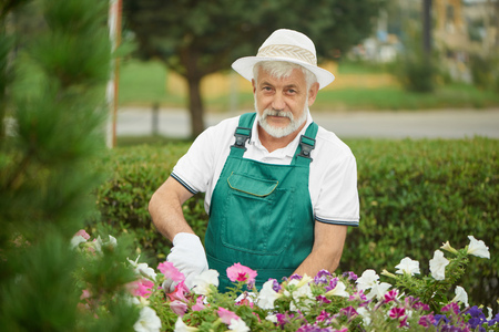 Handsome worker gardener pruning plants and flowers together. Cheerful gray haired bearded man wearing in special overalls with protective glove and light bonnet, cutting flower in garden with plants.