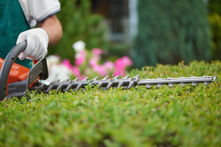 Photo pour Professional male gardener, wearing in special overalls with protective glove working with professional garden equipment in backyard. Hedge trimmer cutting bushes to ideal fence. Gardening concept. - image libre de droit