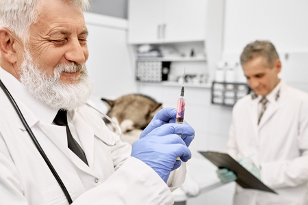 Photo pour Professional vet doctor wearing in blue gloves and white medical gown. Bearded vet holding, looking at needle for dog injection. Assistant standing with folder near dog. - image libre de droit