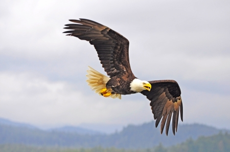 Eagle  British Columbia  Canada