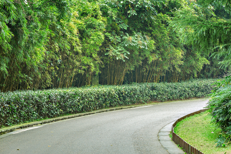 View of the road in the city jungle park at day time. China.