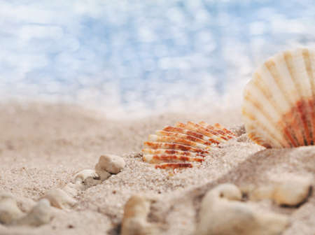 Photo pour Two small seashells and pebbles on the beach with perfect seascape in the sun. Place for text. Close, selective focus. Banner template. - image libre de droit