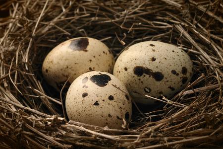 Close up nest with three quail eggs.