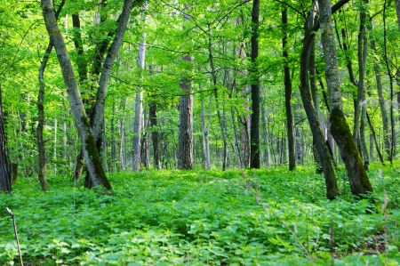 Bright Green Spring Forest Mural Wallpaper