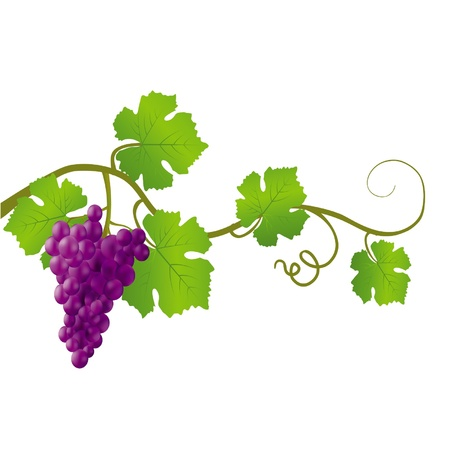 Black grapes on a white background