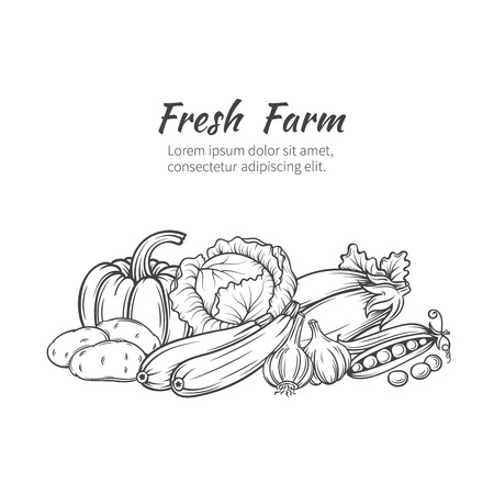 Foto de Hand drawn vegetables banner with pumpkin, potatoes, cabbage, zucchini, eggplant, garlic, peas. - Imagen libre de derechos