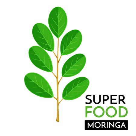 Illustration pour Moringa vector icon. - image libre de droit