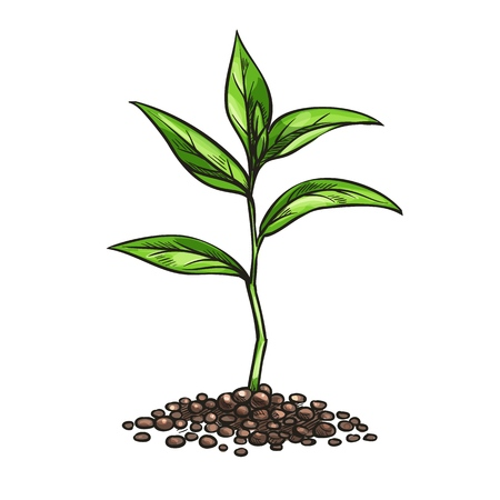 Illustration pour Vintage sprout, sketch style - image libre de droit