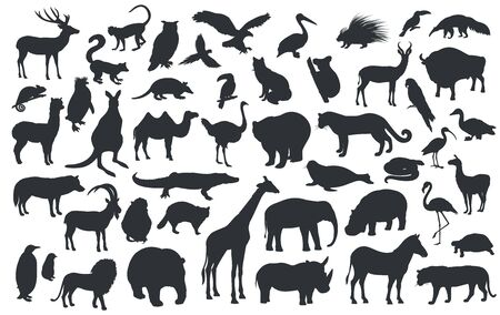 Illustration pour Silhouettes of traditional animals zoo. Bear, giraffe, panda, tiger, lion, camel and other wild animals and birds. Vector illustration. - image libre de droit