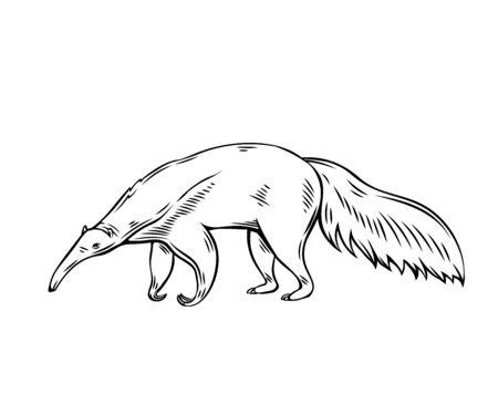 Illustration pour Anteater animal icon. Ant-bear outline vector illustration for zoo design. - image libre de droit
