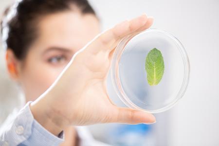 Photo pour Analyzing leaf in Petri dish - image libre de droit