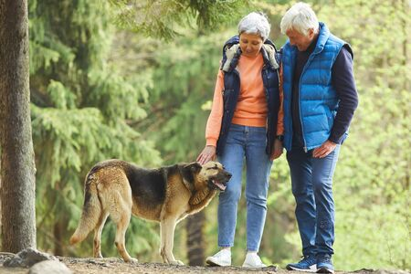 Photo for Full length portrait of active senior couple petting big shepherd dog while hiking in sunlit forest - Royalty Free Image
