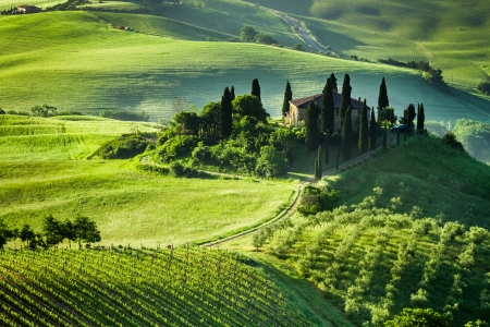 Early Morning Italian Villa And Vineyard