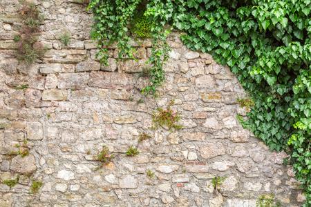 Foto de Old stone wall with ivy as background - Imagen libre de derechos
