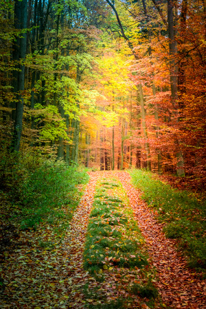 Foto de Beautiful forest in the fall in Poland - Imagen libre de derechos