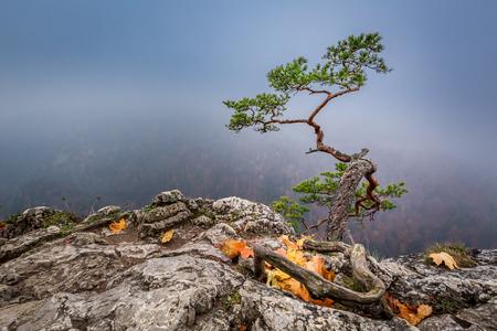 Foto de Misty Sokolica peak in Pieniny mountains in autumn, Poland - Imagen libre de derechos
