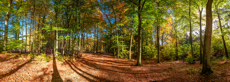 Foto de Panorama of green and gold forest in the autumn, Europe - Imagen libre de derechos