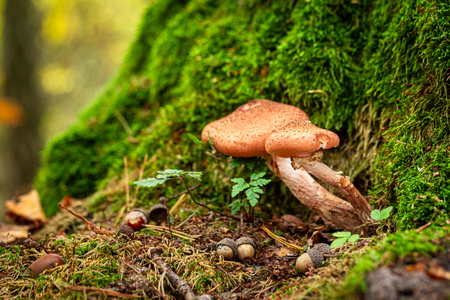 Photo for Small and wild mushrooms in the green forest - Royalty Free Image