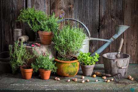 Photo for Aromatic and healthy herbs on the old porch. Rustic garden in summer afternoon - Royalty Free Image