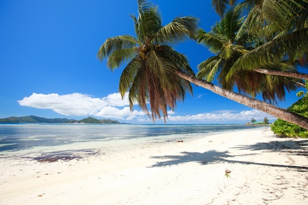 Perfect beach in Seychelles with white sand turquoise waters palm trees and blue sky