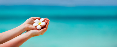 Panorama of a woman holding tropical white frangipani flowers over turquoise tropical ocean waterの写真素材