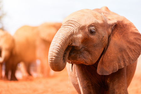 Photo for Close up of elephant in safari park - Royalty Free Image
