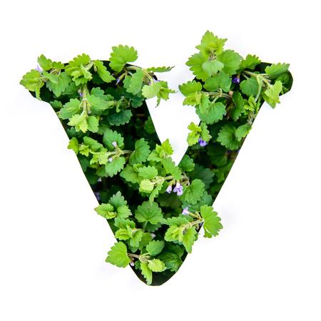 Foto de The letter V of the English alphabet of leaves of green plants in a white paper stencil - Imagen libre de derechos