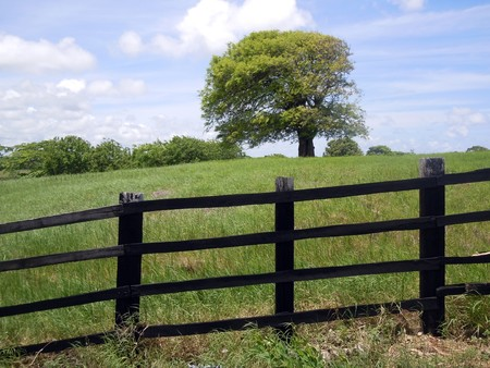 Black fence, tree and green farm field
