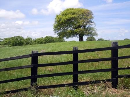 Black fence, tree and green farm field