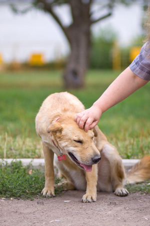 female hand patting big old dog head. Love between dog and human, closeup
