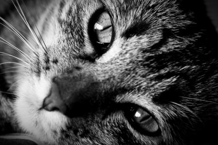 Feline Company