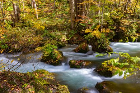 Photo pour Oirase Stream in sunny day, Flowing river, fallen leaves, mossy rocks in Towada Hachimantai National Park, Aomori, Japan. - image libre de droit