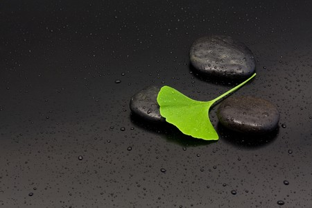 Ginkgo leaf on black pebbles with water drops over black background