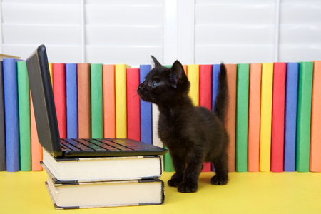 Foto de Small black kitten standing in front of a miniature laptop computer on books, with colorful books in background. Looking at computer screen. - Imagen libre de derechos