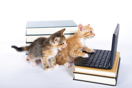 Foto de male orange tabby kitten looking at miniature laptop type computer. Female calico tortie sitting behind with mouth open. talking. Piles of books next to and under computer. paw on keyboard - Imagen libre de derechos