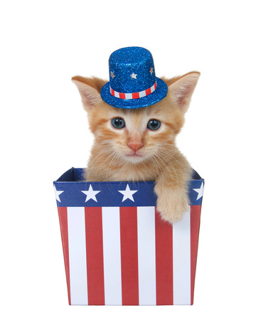 Photo for Tiny orange ginger tabby kitten sitting in a red white and blue patriotic box wearing hat looking directly at viewer with paw over side, isolated on white. - Royalty Free Image