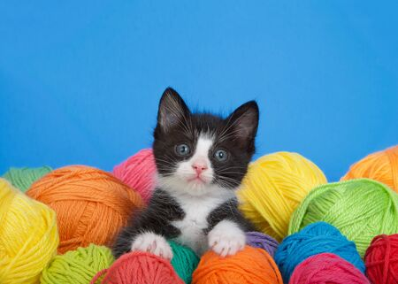 Photo pour black and white tuxedo kitten sitting in a pile of yarn balls in various colors, looking up at viewer. Vibrant blue background with copy space - image libre de droit