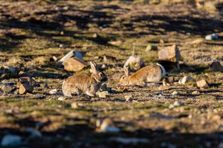 Bunnies Jumping Out of Their Burrows as the Sun Sets