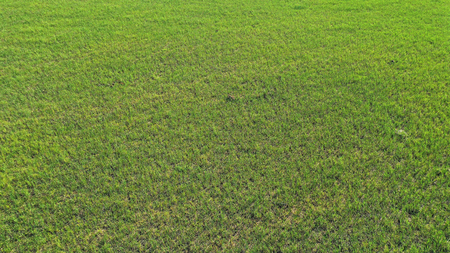Photo pour wild field, aerial view - image libre de droit