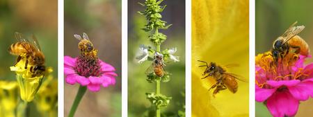 Foto de Panoramic nature montage with set of bee photo elements in white frame - Imagen libre de derechos