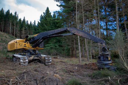 Photo for Heavy yellow logging machinery working on a logging site - Royalty Free Image