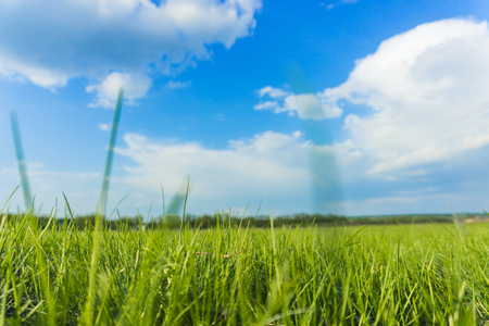 Foto de landscape of juicy green grass and blue sky - Imagen libre de derechos