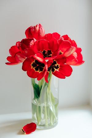 Photo pour red flowers in a transparent vase on a white background - image libre de droit