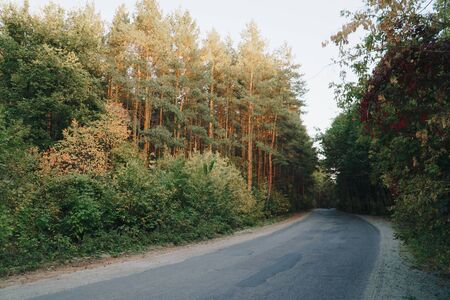Photo pour autumn panorama of the road near the yellow forest 1 - image libre de droit