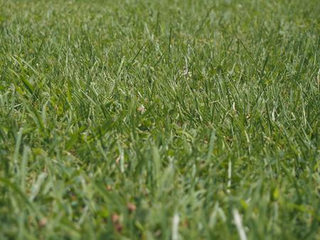 Lawn at park.